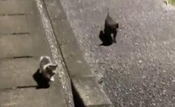 【泣いた】毛布の中に捨てられた子猫兄弟、通りすがりの男性を必死に追い声をかける