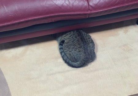 【あたま隠して‥】「来客に怯えるねこちゃん」の画像がカワイイすぎるw