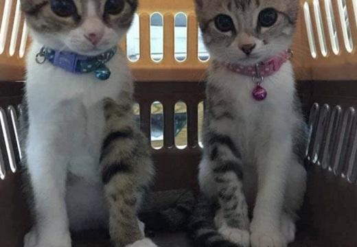 【奇跡的?!】靴下半分こしてるような猫の兄弟が話題「ものすごく可愛い」