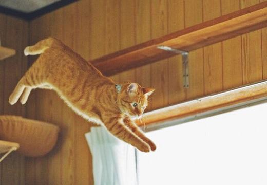 【びっくり】「猫の身体能力を人間に例えると・・」が話題。猫はあなどれない!
