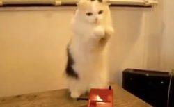 【かわいい】触れずに音が出る楽器、テルミンで遊ぶ猫が話題「表情w」