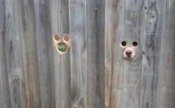 【w】犬専用の覗き穴が話題「ぴったり!」「面白すぎるw」