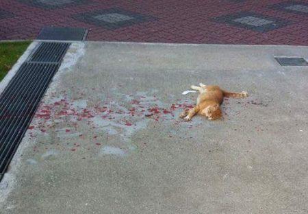 【ドキッ!】とんでもない場所で昼寝する猫が話題「事故かと思った!」