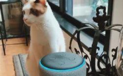 【w】アレクサの喋りを聞いた猫、声の主を探しキョロキョロする様子がカワイイ
