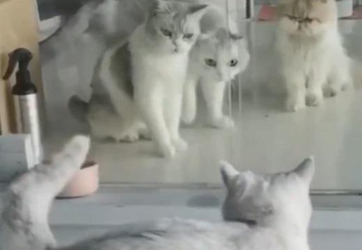 【!?】僅かな隙間を通過した猫と、それを目撃した猫達の反応がすごいw