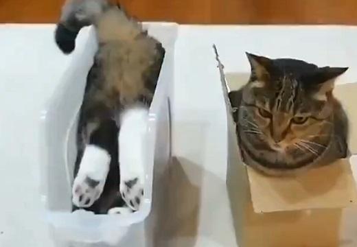 【二極化】箱があった場合‥全く逆の入り方をする猫の動画がカワイイw