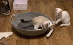 【w】どんくさい猫ちゃんの動画、愛しすぎる