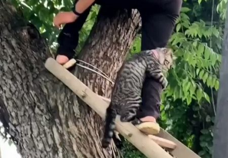 【w】高いところが怖い猫が話題「何回も見てる」「可愛いすぎるw」