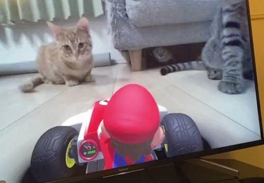 【w】マリオカート新作と遊ぶ犬や猫が話題「かわいすぎてレースとかどうでもいいw」