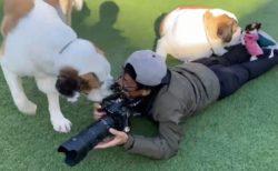 【犬まみれ】犬のプロカメラマンさん、お仕事風景がステキすぎるw