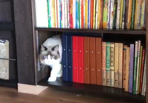 【?!】猫がどんどん出てくる本棚が話題「なにこれw」「欲しい!」