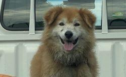 【w】不機嫌だった犬、田んぼで遊んだ後の泥だらけ満足顔がたまらなく可愛い