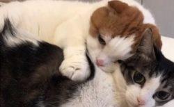 【動画】抱きついてむにむにしてる猫とされてる猫がカワイイすぎるw