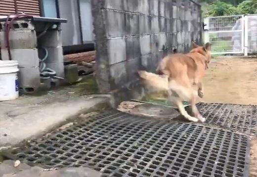 【爆笑】eスポーツ実況のプロアナウンサーが犬の脱走を実況すると・・・