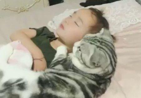 【なかよし】ぴったり抱き合って眠る猫と女の子が話題「猫の顔w」