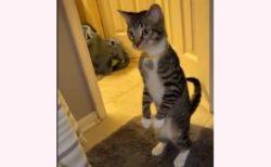 【驚き方w】びっくりしすぎて仁王立ちしちゃう猫達が話題