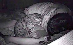 【猫w】寝てるとき苦しくなるのでカメラを設置してみたら・・・