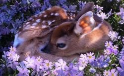 【ひゃー】鹿の赤ちゃんが寝てる様子の写真4枚、かわいさしかない!