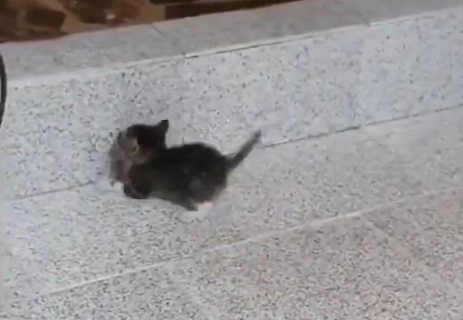 【ぴょこ】子猫の段差ジャンプチャレンジが話題「しっぽ最高にかわいい」