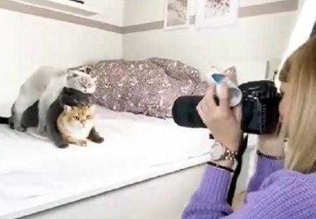 【w】美人飼い主の撮影会につきあう猫3匹の様子が話題