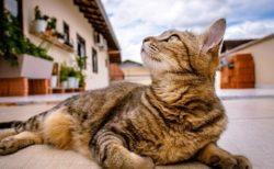 【泣いた】毎朝、飼い主のお墓へ2年間‥けなげな猫が話題に