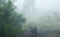 【すごい】キリンの存在感がよく分かる1枚の写真にネット騒然「ミストみたい・・」
