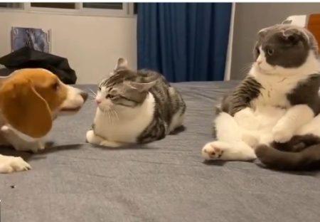 【爆笑】猫にちょっかいかける犬を見つめるもう1匹の猫が話題「表情w」