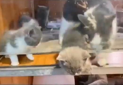 【感動】頭がひっかかった子猫を即座に救出する母猫が話題「兄弟も心配してるw」