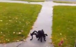 【爆笑】かわいい犬が巨大クモのコスプレ、大騒ぎにw