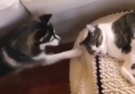 【動画】譲ってもらいたい犬と、ガン無視する猫が話題w