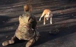 【泣いた】軍隊から数年ぶりに帰宅。犬との再会場面が話題に