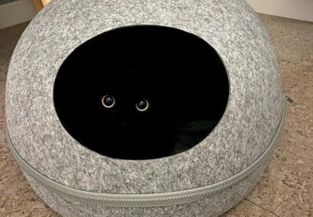 【きょろっ】真っ暗なところからこっちを見つめる黒猫が話題「最高w」