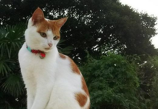 【泣いた】迷子の美人猫さん、1年ぶりに無事帰宅する