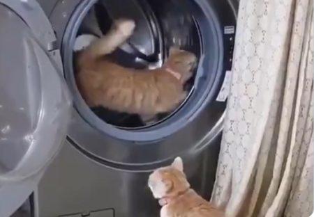【w】ドラム型洗濯機でルームランナーする猫が話題に「待ってる子も可愛いw」