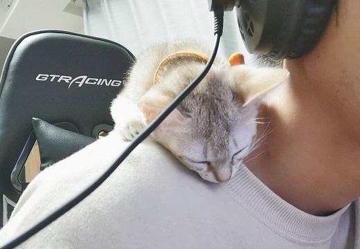 【こねこ】首あたりでごそごそ・・そのまま眠っちゃう子猫が可愛いw