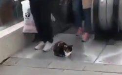 【w】絶対にどかない猫と、踏まないよう避けていく人達が話題に