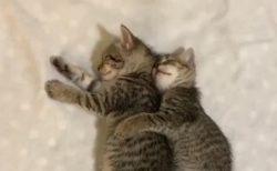 【動画】ぴったり抱きつき幸せそうに眠る猫達が話題「気持ちよさそう」「羨ましいw」