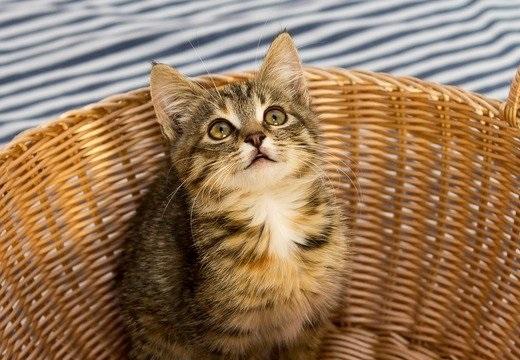 【話題】猫が人に「ニャー」って鳴く理由がカワイイすぎるw