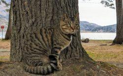 【ステルス猫】ねこの縞模様の理由がよく分かる写真が話題に「完全に迷彩w」