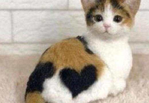 【w】きれいなハート柄が入ってる猫達が話題に