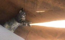 【!】かめはめ波を打つ猫が激写される!