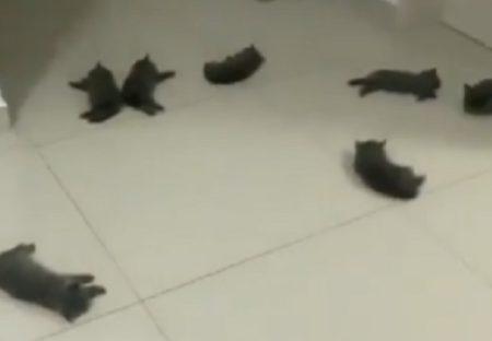 【動画】床暖房でくつろぐたくさんの猫が話題に「たまらん!」