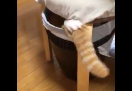 【動画】手でひっぱって尻尾をしまう猫が話題「手もカワイイw」「手動なんだ!」