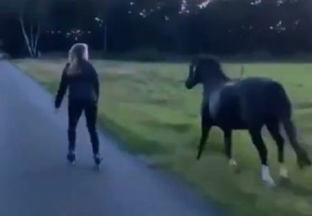【壮大】金髪少女と並走する黒い馬、ステキすぎる動画が話題に