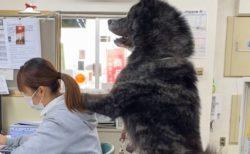 【動画】秋田犬会館、普段の様子が話題に「羨ましいw」