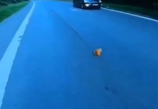 【泣いた】車道でうずくまる子猫、バイクのお兄ちゃんに発見・保護される