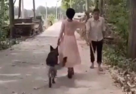 【賢い】通り過ぎた男性の白い杖に気づいた犬、自らすごい行動に