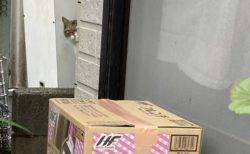 【w】手作り段ボールハウスに入ってる猫と、後ろからそっと覗く猫が話題に