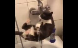 【動画】水を飲みたい猫、トムとジェリーみたいな状況にw