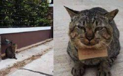 【w】3日ぶりに帰宅した猫の話、登場人物全員かわいいと話題に